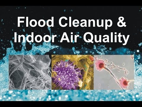 flood-cleanup-&-indoor-air-quality