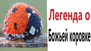 Приколы! ЛЕГЕНДА О БОЖЬЕЙ КОРОВКЕ - МЕМЫ!!! Смешные видео от – Доми шоу!