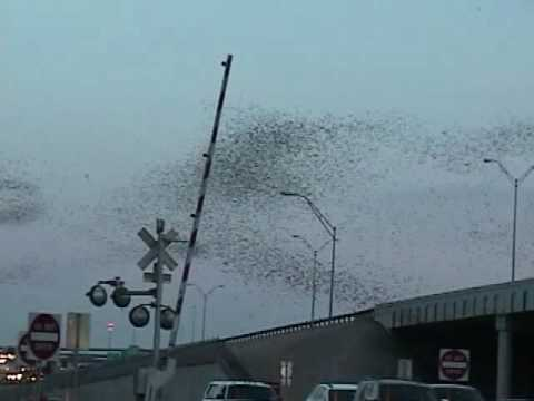 Bats Of Round Rock, TX