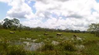 Invierno y Raza Carora 20120830