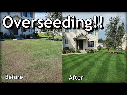 how-to-overseed-your-lawn-in-spring-//-complete-step-by-step-guide