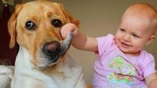 Смешные видео 2021 Приколы с животными Самые милые собаки и дети смешные моменты из жизни детей