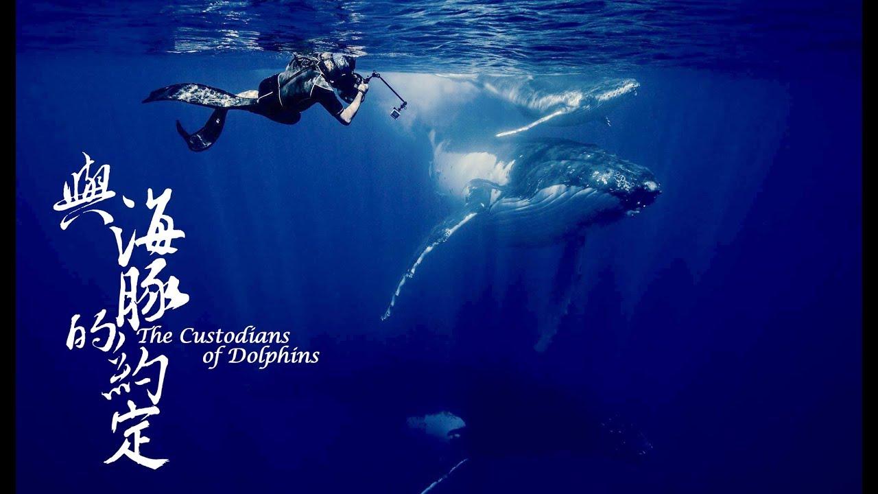 公視4K紀錄片《與海豚的約定》幕後花絮:水下攝影篇 3 - YouTube