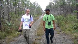 Conducting Research on the Critically Endangered Bahama Oriole on Andros Bahamas