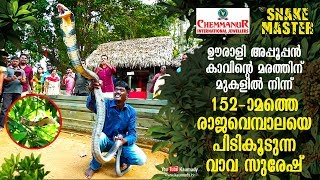 Vava Suresh rescues 152nd King Cobra from Oorali Appooppan Kavu tree top | Snakemaster | EP 420