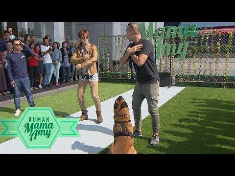 Sparta Si Anjing Pintar Yang Bisa Melakukan Apapun  - Rumah Mama Amy (14/9)