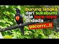 Burung Cinta Ini Gacorrr Bunyinya Syahdu Di Aviary Begini Ternyata Suaranya  Mp3 - Mp4 Download