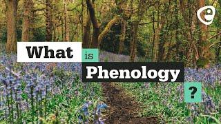 Eco Talk: Christine Tansey - Track A Tree