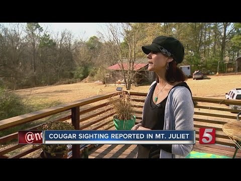 Cougar Sightings On The Rise In Middle Tennessee