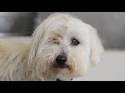 Homeless Dog Gets Makeover That Saves His Life! - Bailey