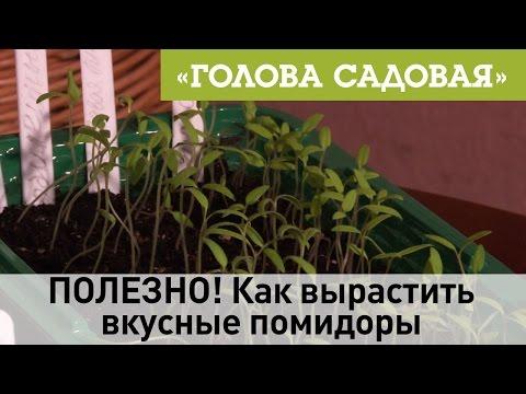 Питомники растений Сибирского федерального округа