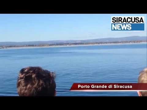 Siracusa, Delfini avvistati al Porto grande: l'emozione dei piccoli biologi