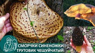 🍄 Три дня грибы в апреле: сморчки, синеножки, трутовик | Грибные походы и рецепты Гордеевых