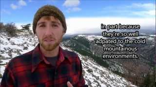 #SciFund- high, cold, and windy: winter ecology of the American pika