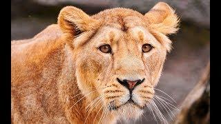 Животные которые могут убить своих детенышей