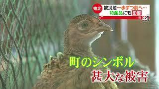 2018年7月に発生した西日本豪雨に関して、7月25日に南海放送の夕方ニュース『News Ch.4』で放送した内容です。