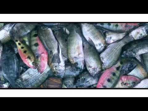 Trailer do filme Ashanti