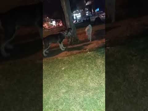 Dog vs cat fight compilation