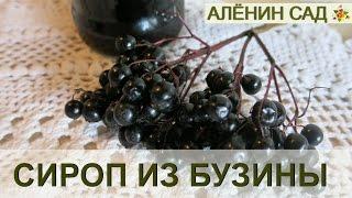 видео сироп бузины черной