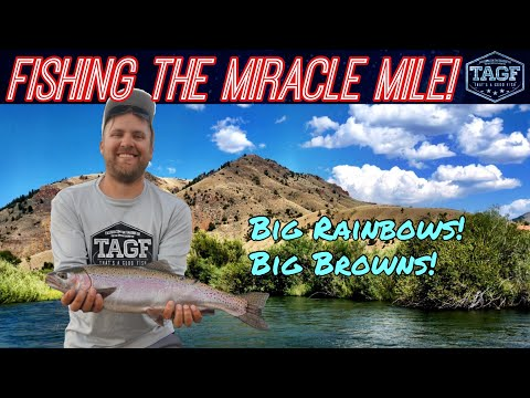 Wyoming Trout Fishing the Miracle Mile (Browns & Rainbows)