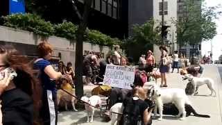 99% Media - Walk against #BSL / Marche contre #LSR - #Montreal