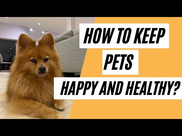 How To Keep Your PETS Happy And Healthy? (Healthy Lifestyle)