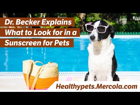 Dr. Becker Explains What to Look for in a Sunscreen for Pets
