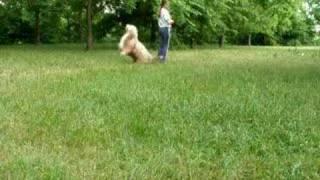 Dog Dancing - Training