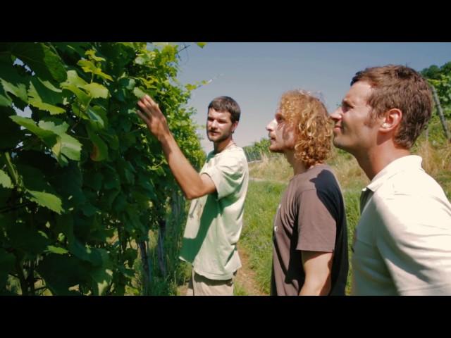 Jungunternehmer-Video | Fungizid aus Komposttee