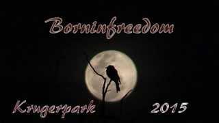 """Borninfreedom"" krugerpark 2015 wildlife movie."