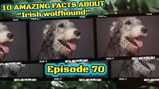 Top 10 amazing facts about Irish Wolfhound.