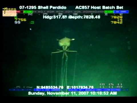 Deepwater Creature from 7800 ft of water