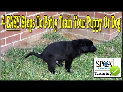 The Best Way To Potty Train Puppy Easy Steps Housebreak Dog