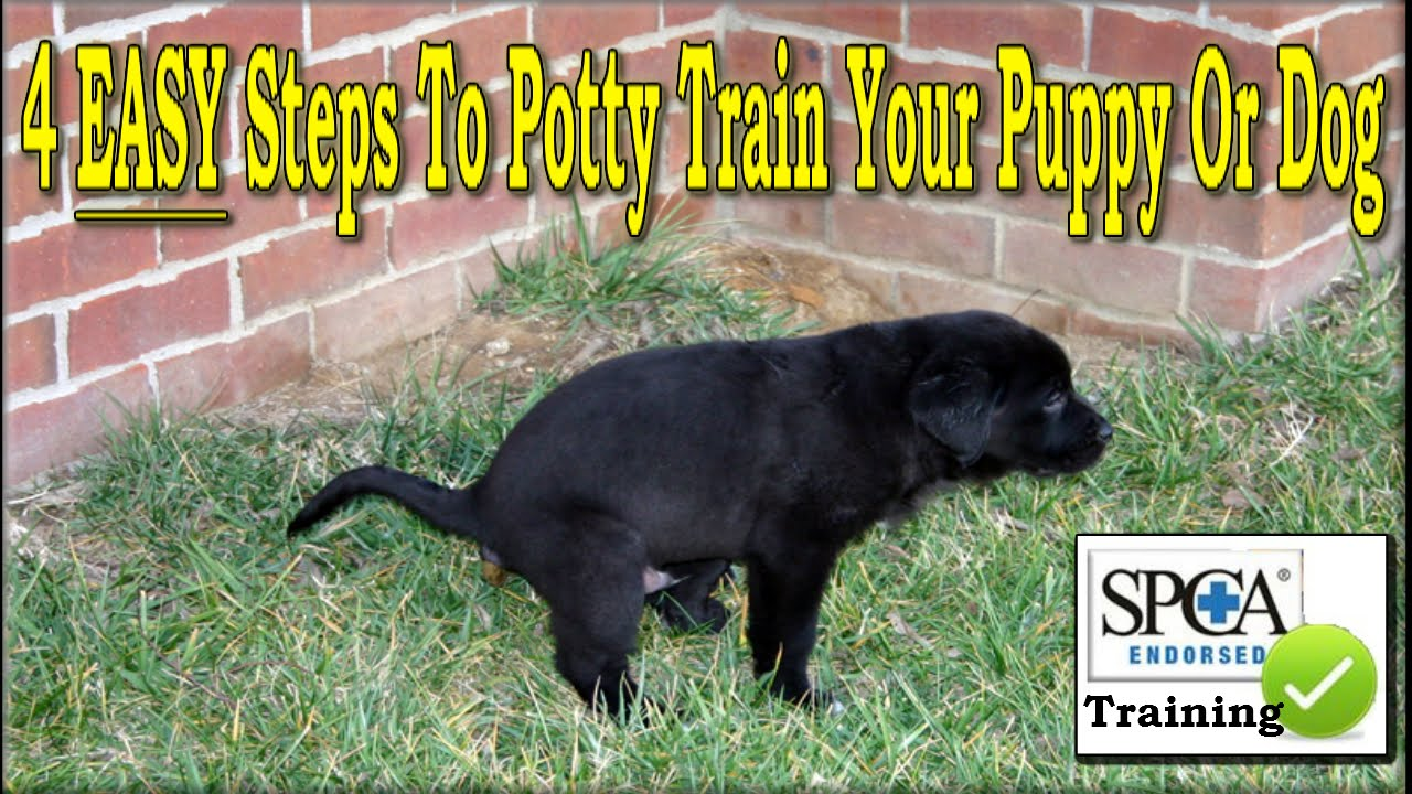 Best Way To House Train Your Dog