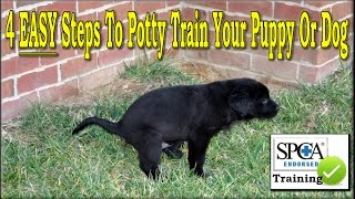 **** The Best Way To Potty Train a Puppy ♥♥ 4 EASY Steps ♥♥ Housebreak a Dog +++