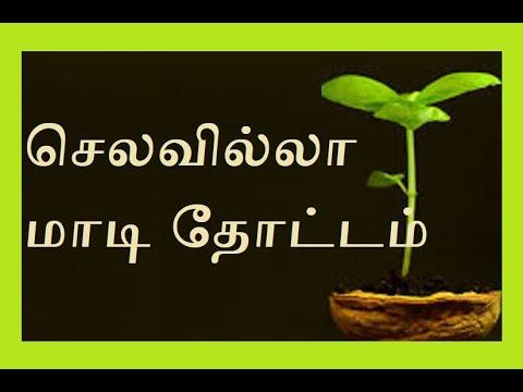 Budget gardening in Tamil