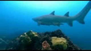 Tiburon, en las garras del hombre (Sharkwater) español (8/9)