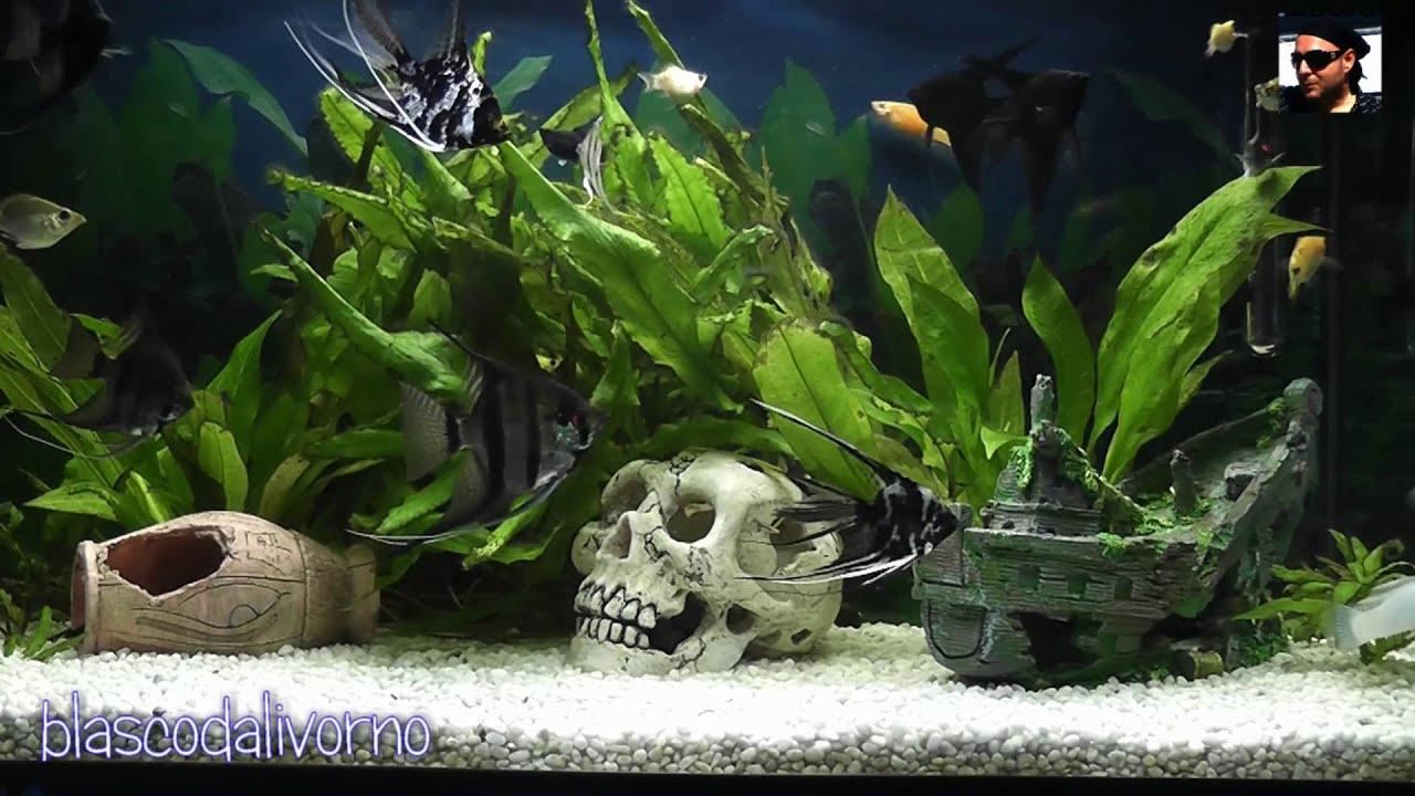 acquario tropicale d 39 acqua dolce youtube