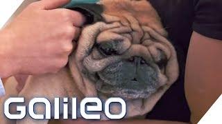 Was mache ich, wenn? Haustier-Edition | Galileo | ProSieben