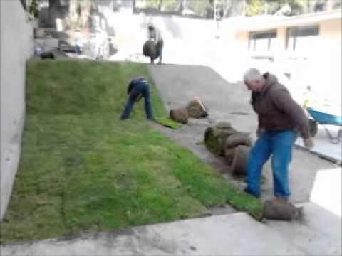 Pasto en rollo colocaci n de pasto jardiner a barreto for Cesped en rollo
