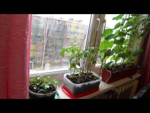 Домашний огород дома огурцы помидоры перец