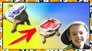 Самая БЫСТРАЯ черепаха Маквин против Салли