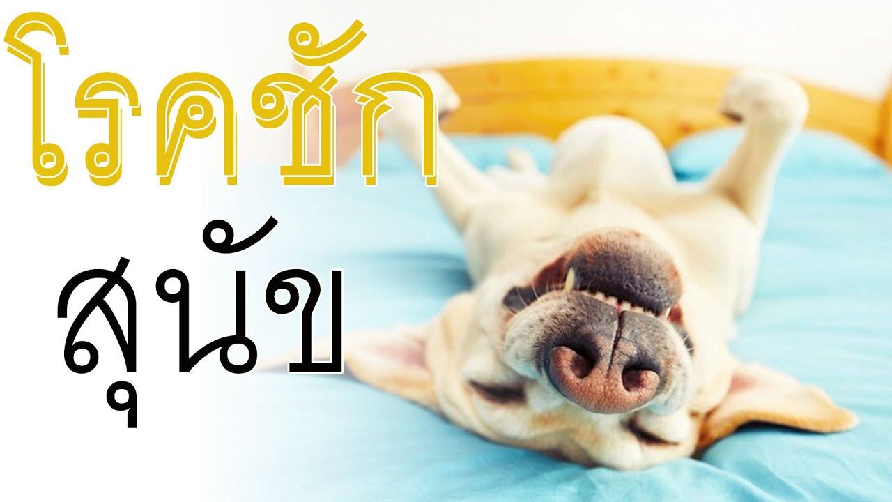 หมาชักเกร็ง สุนัขมีอาการเกร็งท้อง สมุนไพร รักษาโรคลมชักในสุนัข สุนัขมีอาการเกร็งทั้งตัว สุนัขมีอาการ
