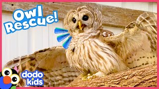Brave Owl Needs A Hero To Help Him Fly Again | Rescued! | Dodo Kids
