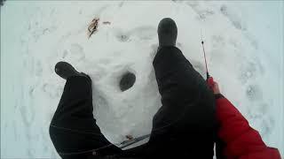 Рибалка Окунь біля будинку Закриття зимової ловлі !