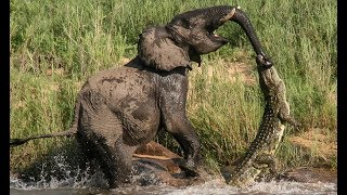 7 CRAZIEST Animal Fights Caught On Camera - Animals attack
