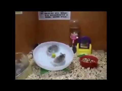 Видео - смешные котята! Смотреть котят на видео бесплатно