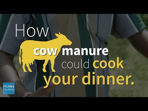 The joy of cooking... with cow poop | The World on YouTube