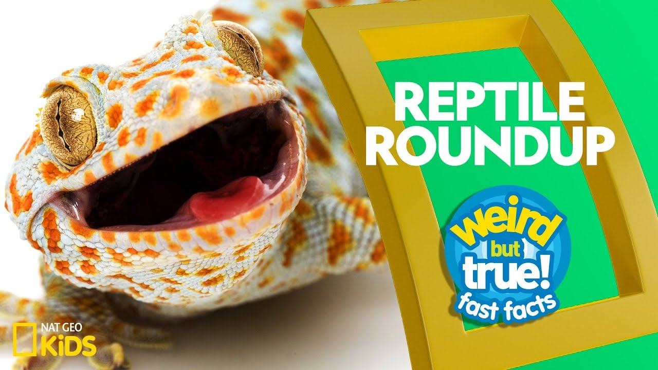 Reptile Roundup | Weird But True!—Fast Facts