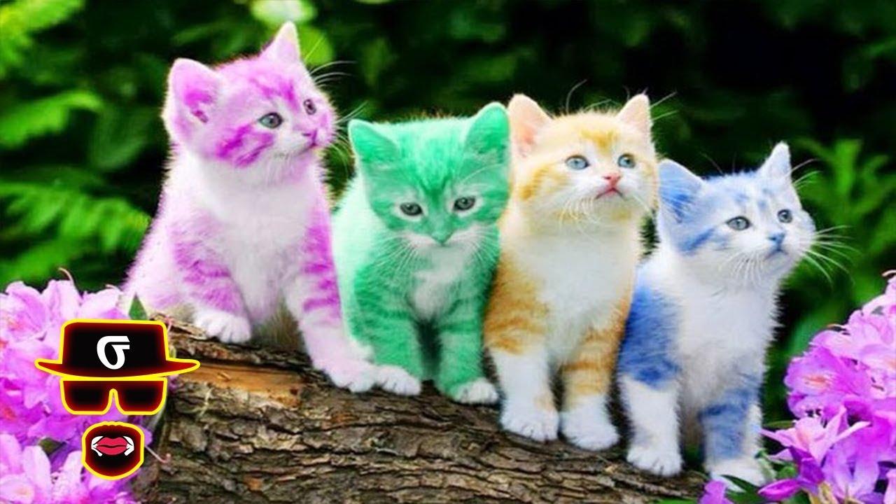 Download 87+  Gambar Kucing Anggora Keren Terbaru HD